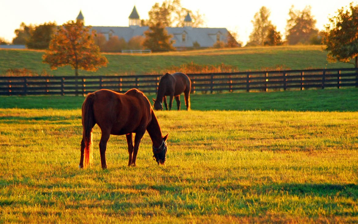 Two horses grazing late afternoon in Kentucky