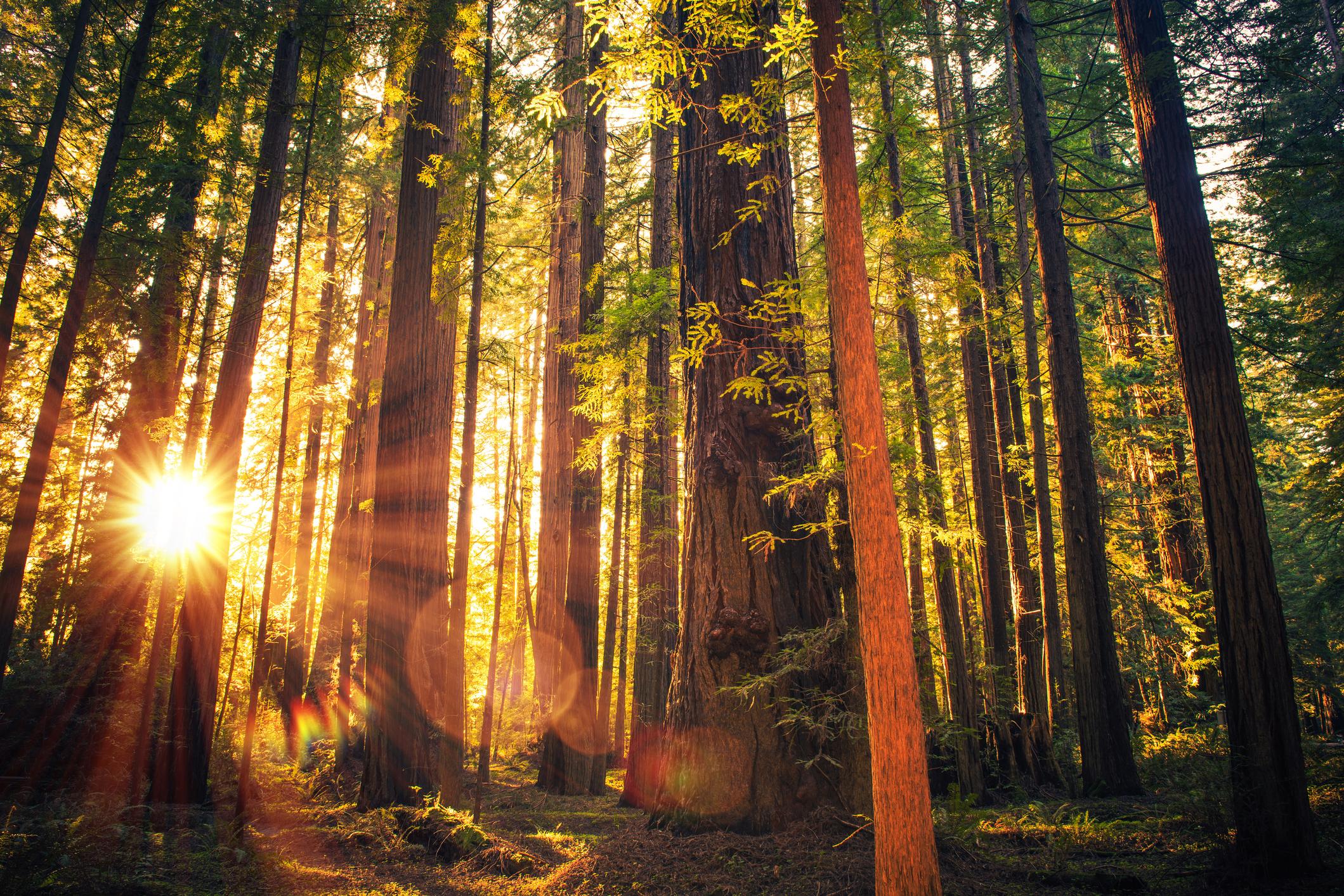 Sunlight streams through a dense forest.