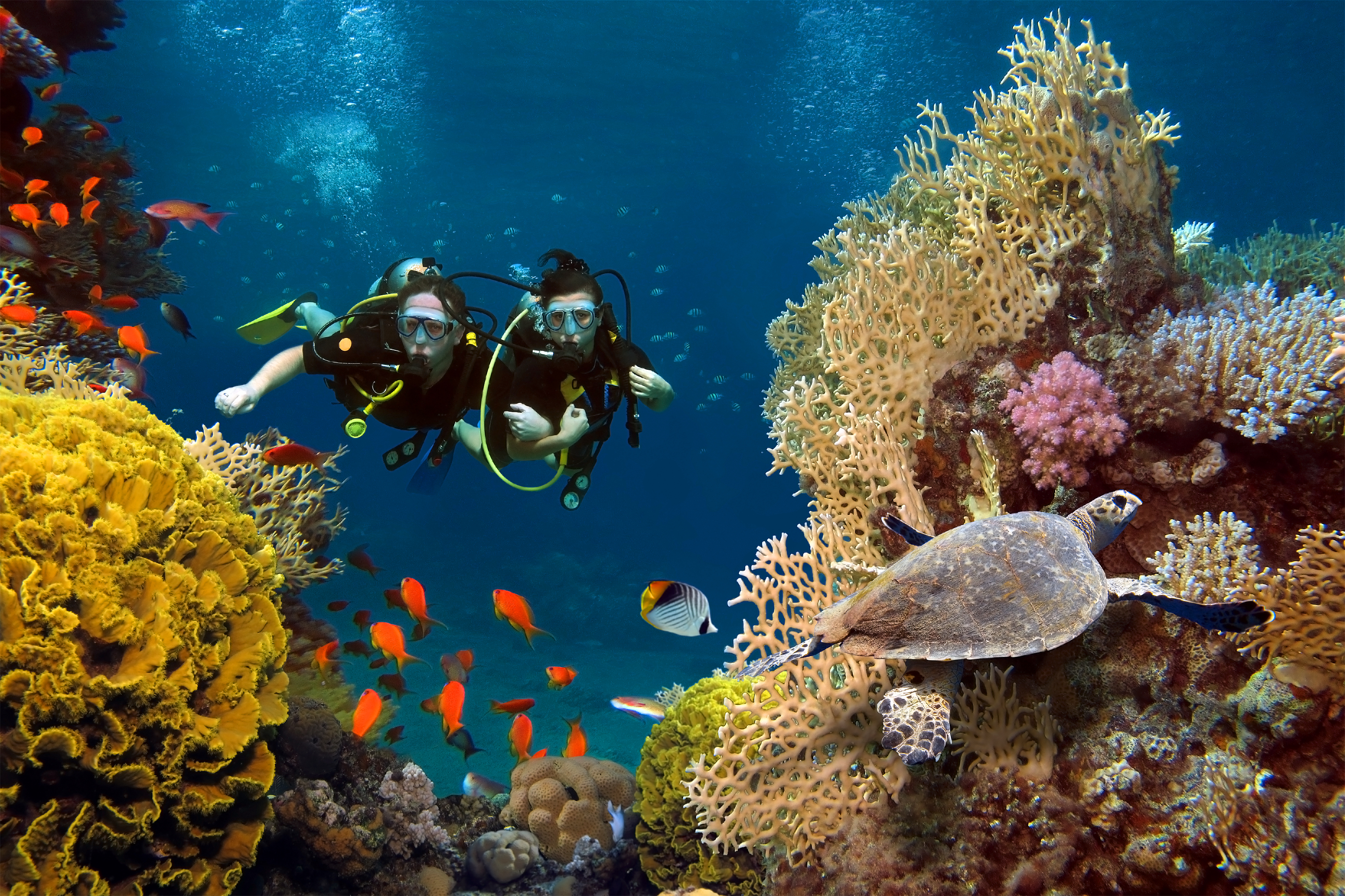 A couple dives near a coral reef.