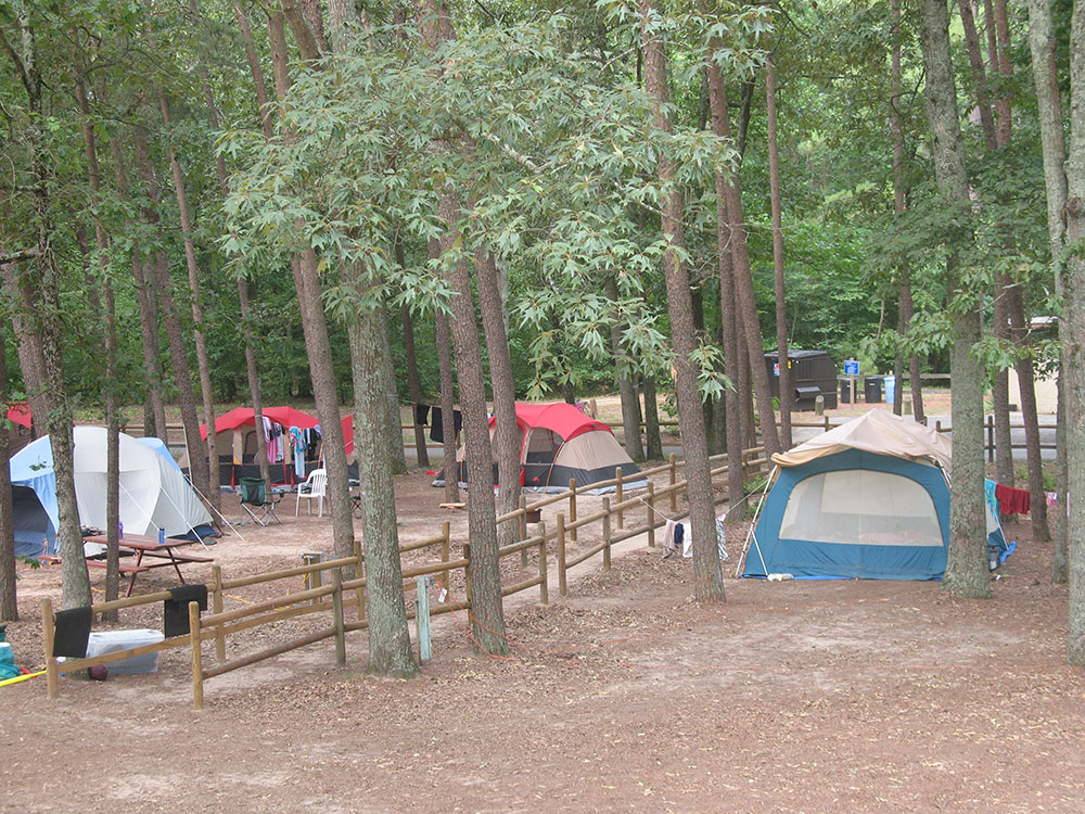 Tents erected under shady trees in campground.