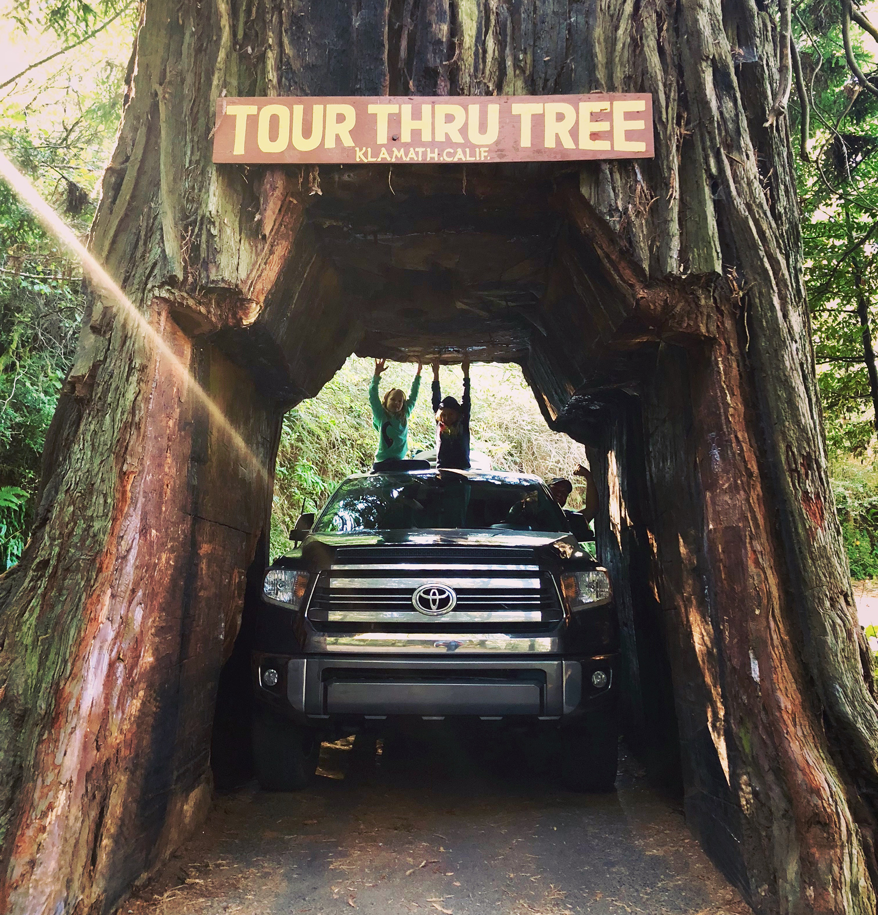 Driving a truck through a hole in a tree.