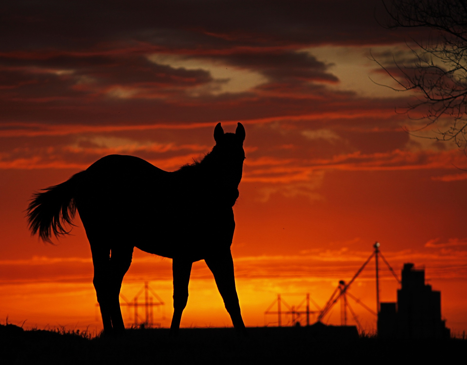Horse silhouetted against crimson sky.