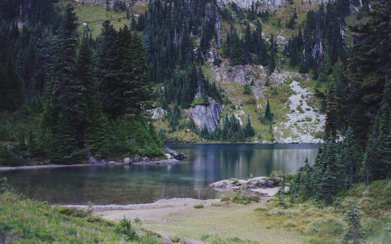 Pine trees surrounding Eunice Lake, Washington