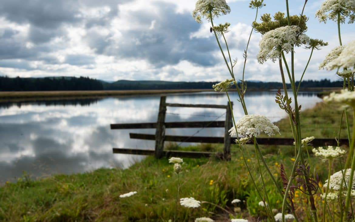 Wildflowers blooming along the Willapa River -