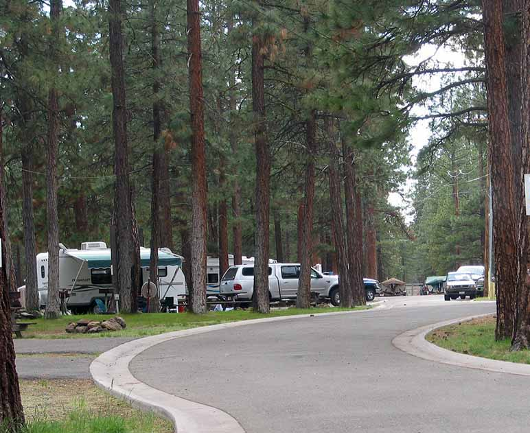 A winding road through a wooded campground.