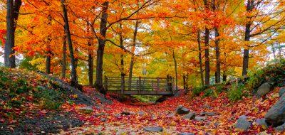 Beautiful autumn leaves scenario.