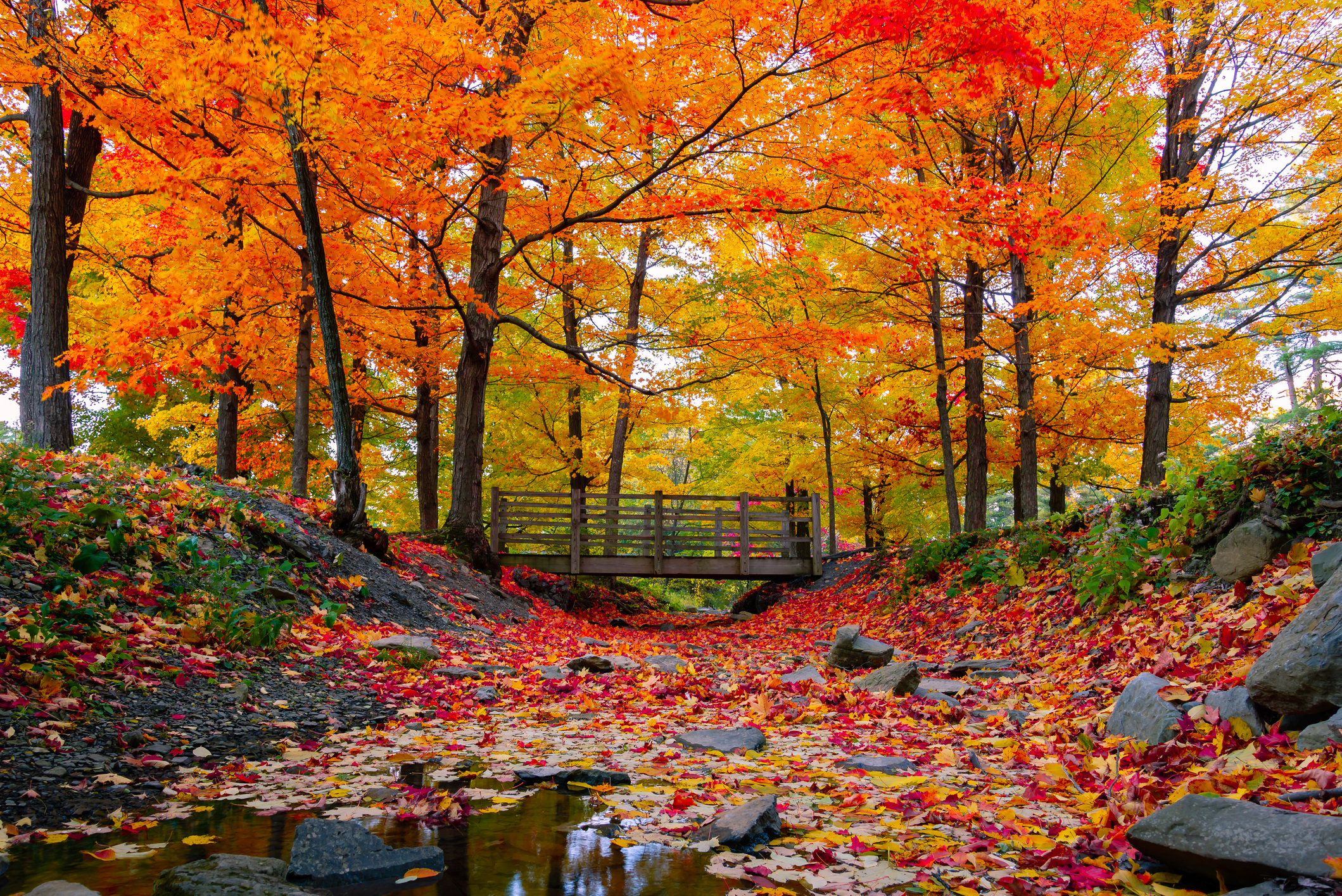 Beautiful autumn leaves scenario.