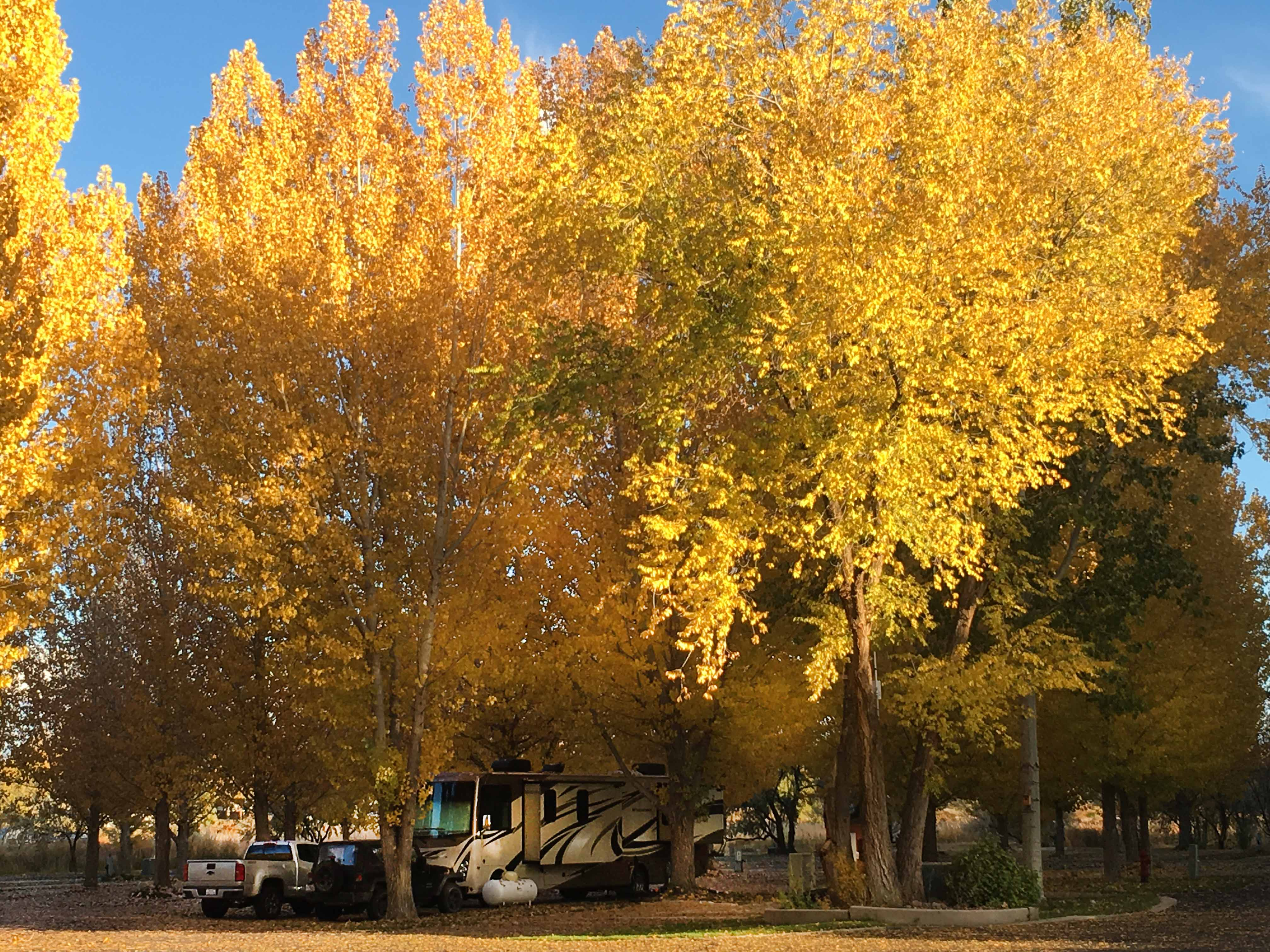 A motorhome parked under aspen trees ablaze with fall color.