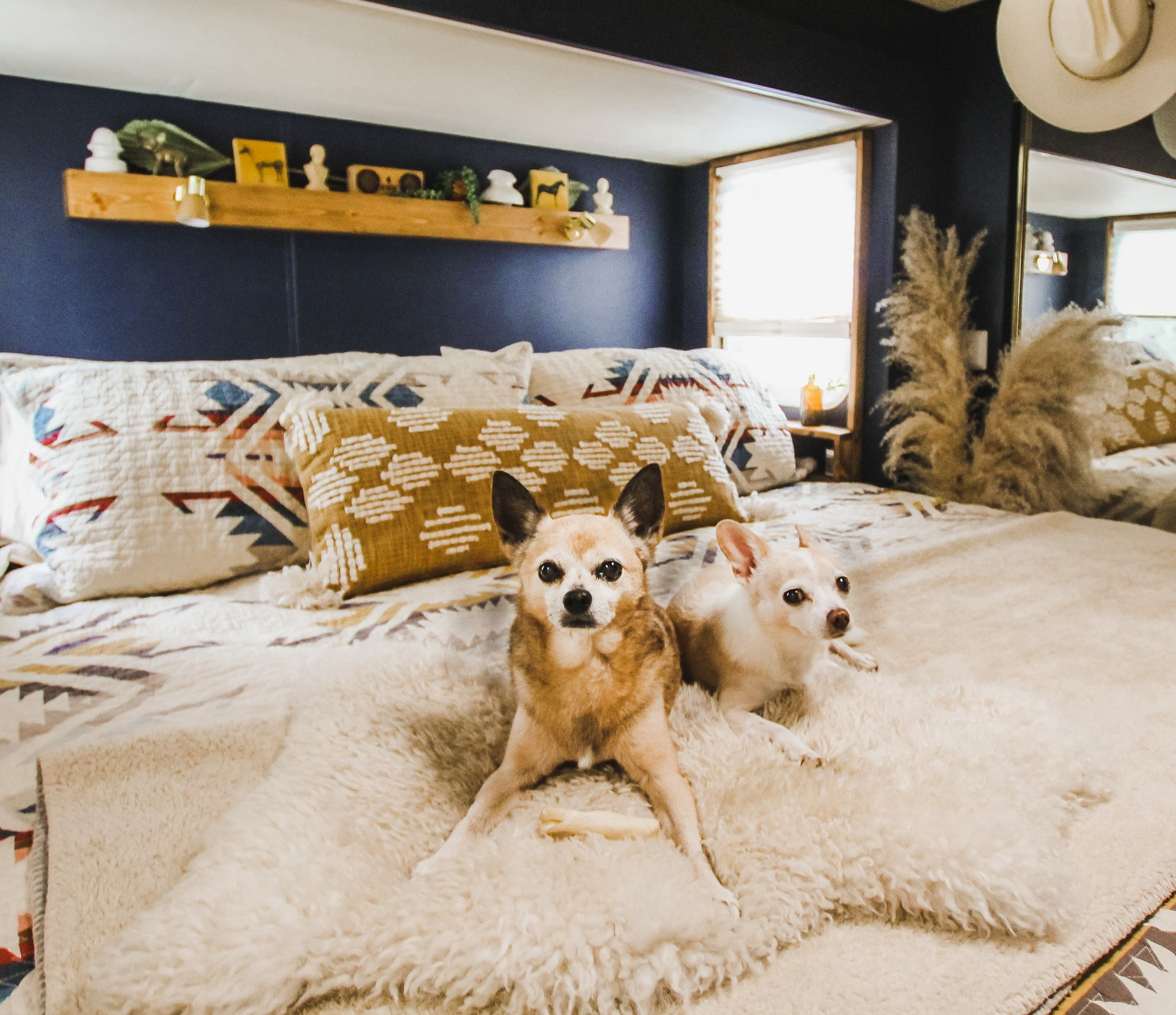 Two Dogs on a Bed.