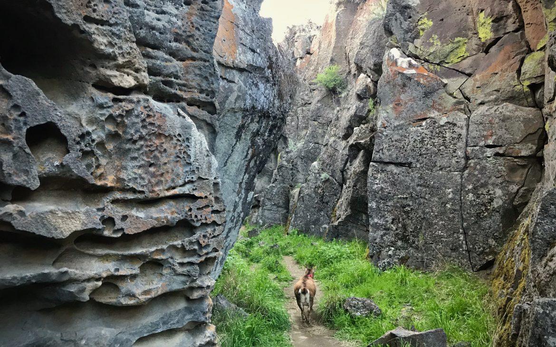 Mountain goat enjoying the lush bottom floor of the volcanic fissure.