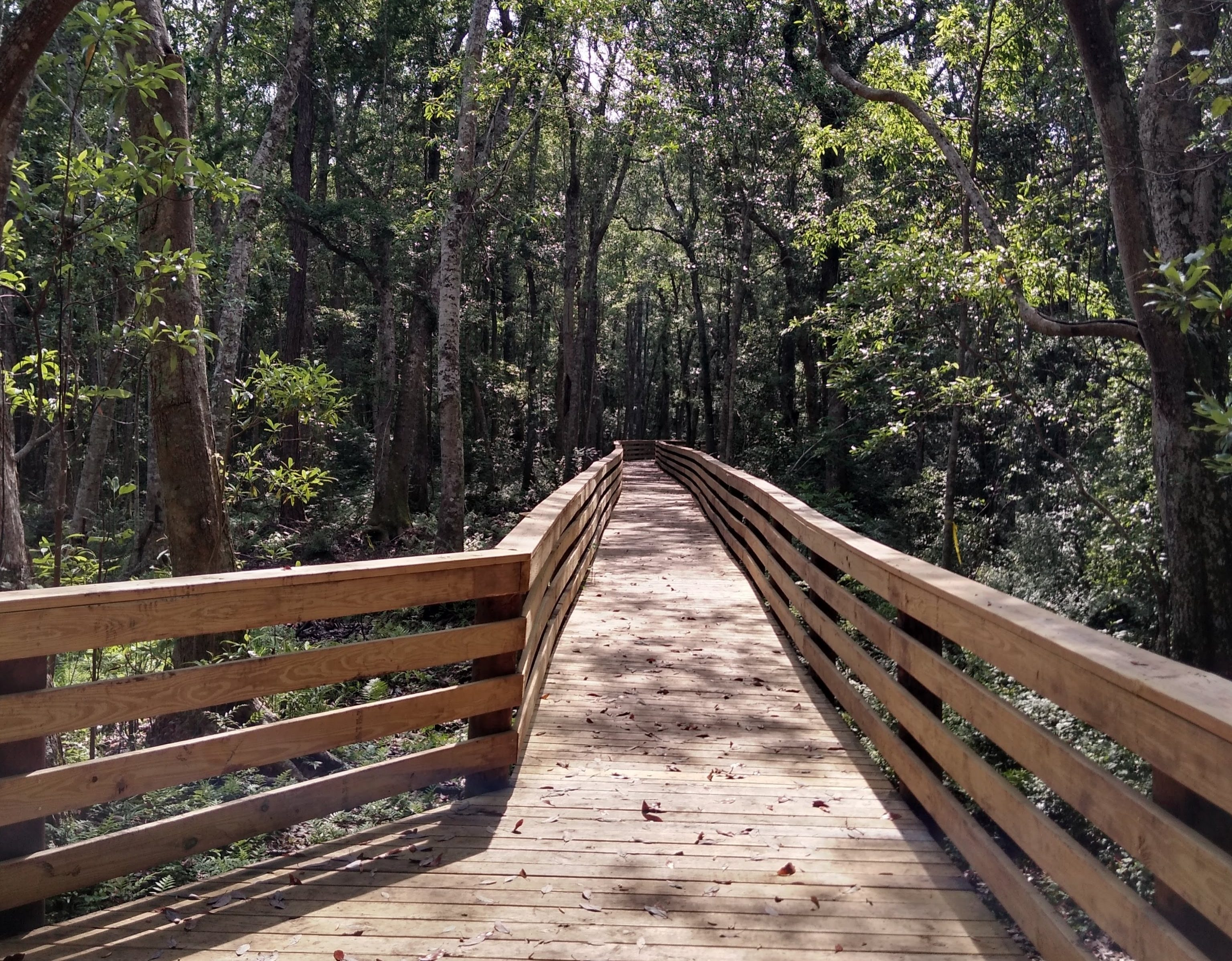 Wooden walkway leads into a forest trail.