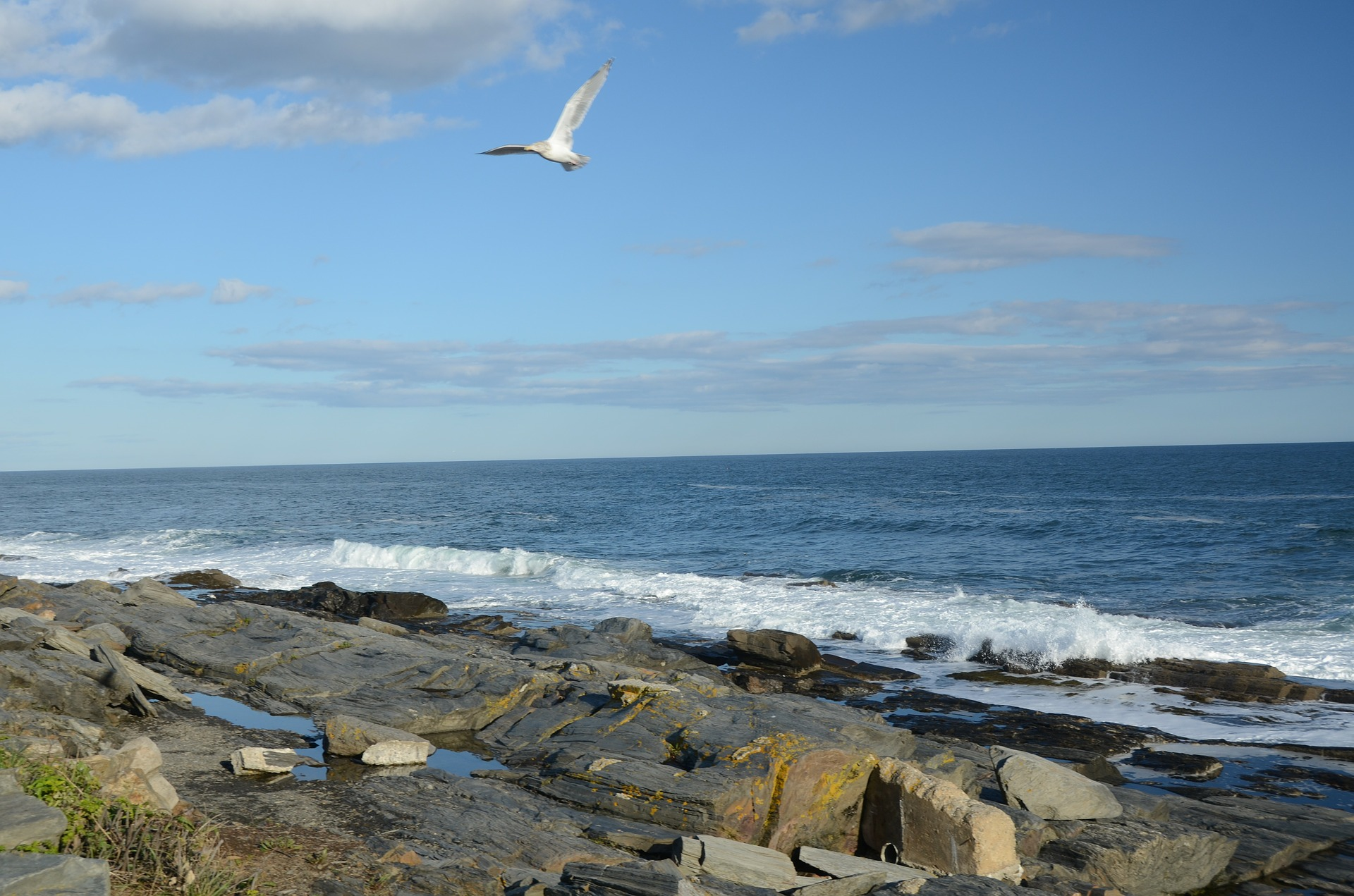 A seagull flies above rugged rocks on the caost