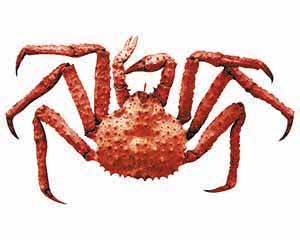 A spiky-looking crab ready to haunt your nightmares.