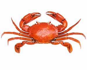 Red crab from above