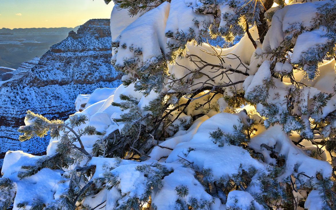 Snow capped Pine tree, with sun star.
