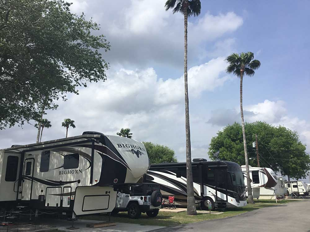 A row of trailers and motorhomes under palm trees.