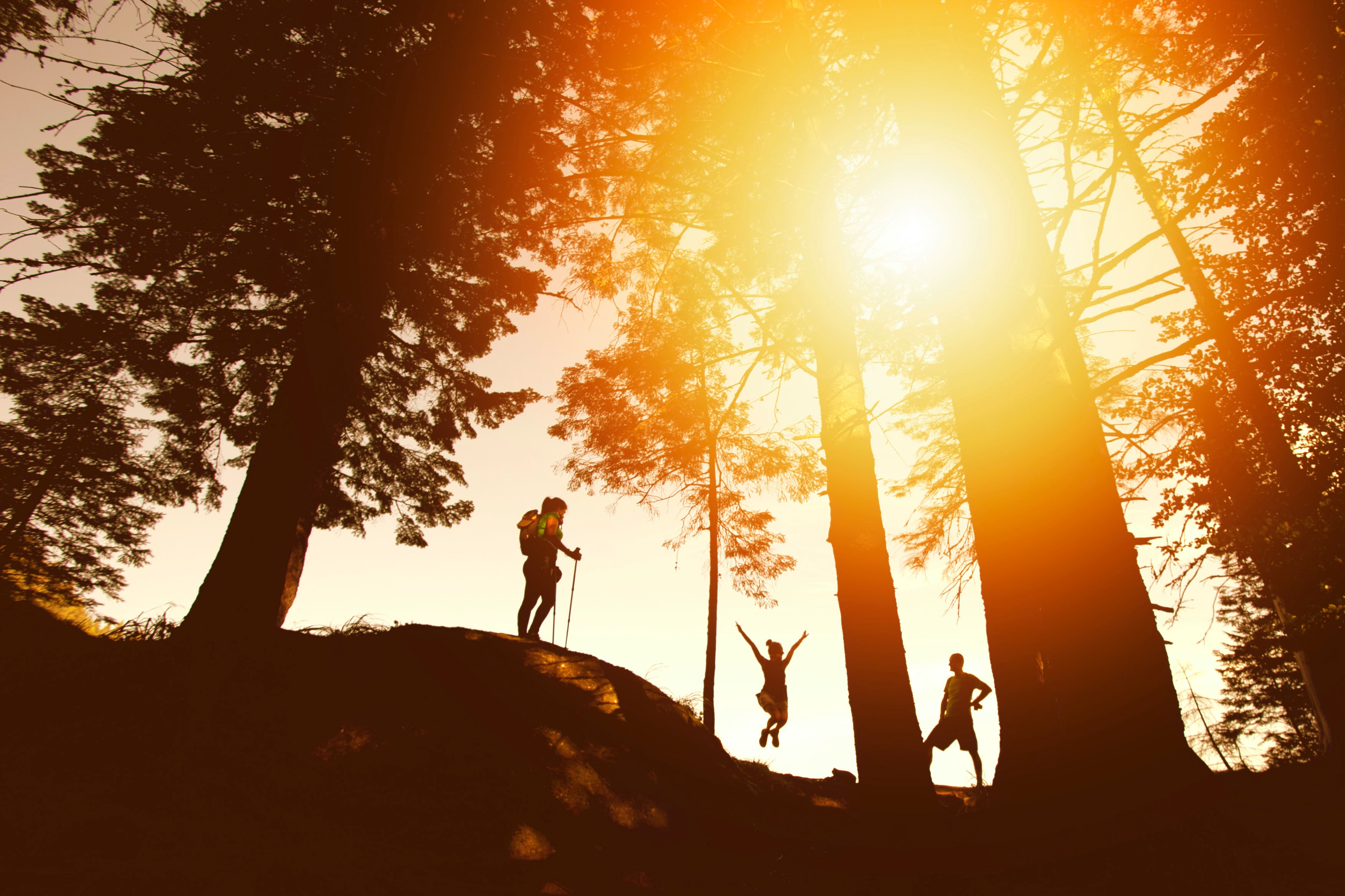 Three hiker silhouettes among large trees at sunset