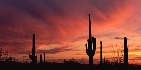 Saguaro cacti against a crimson dusk sky.