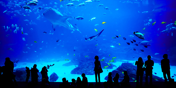 A group of people looking at animals at the aquarium