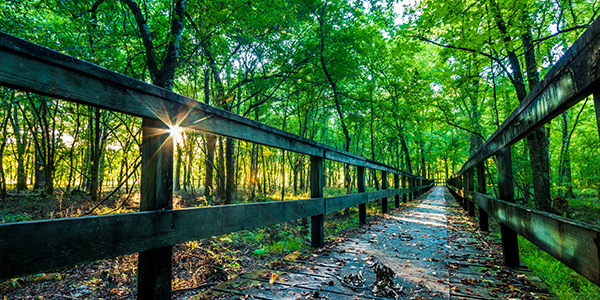 Sunrise on a hiking trail on the Natchez Trace Parkway