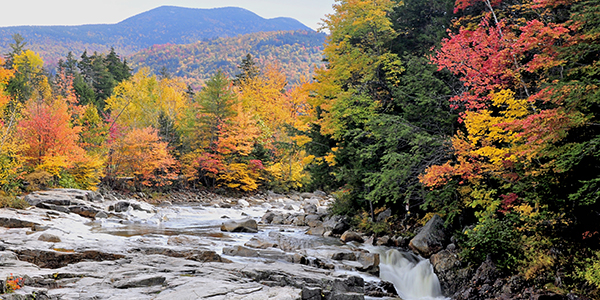 Autumn trees in White Mountain Forest near the river