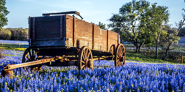 Wagon in field of bluebonnets in texas hill country