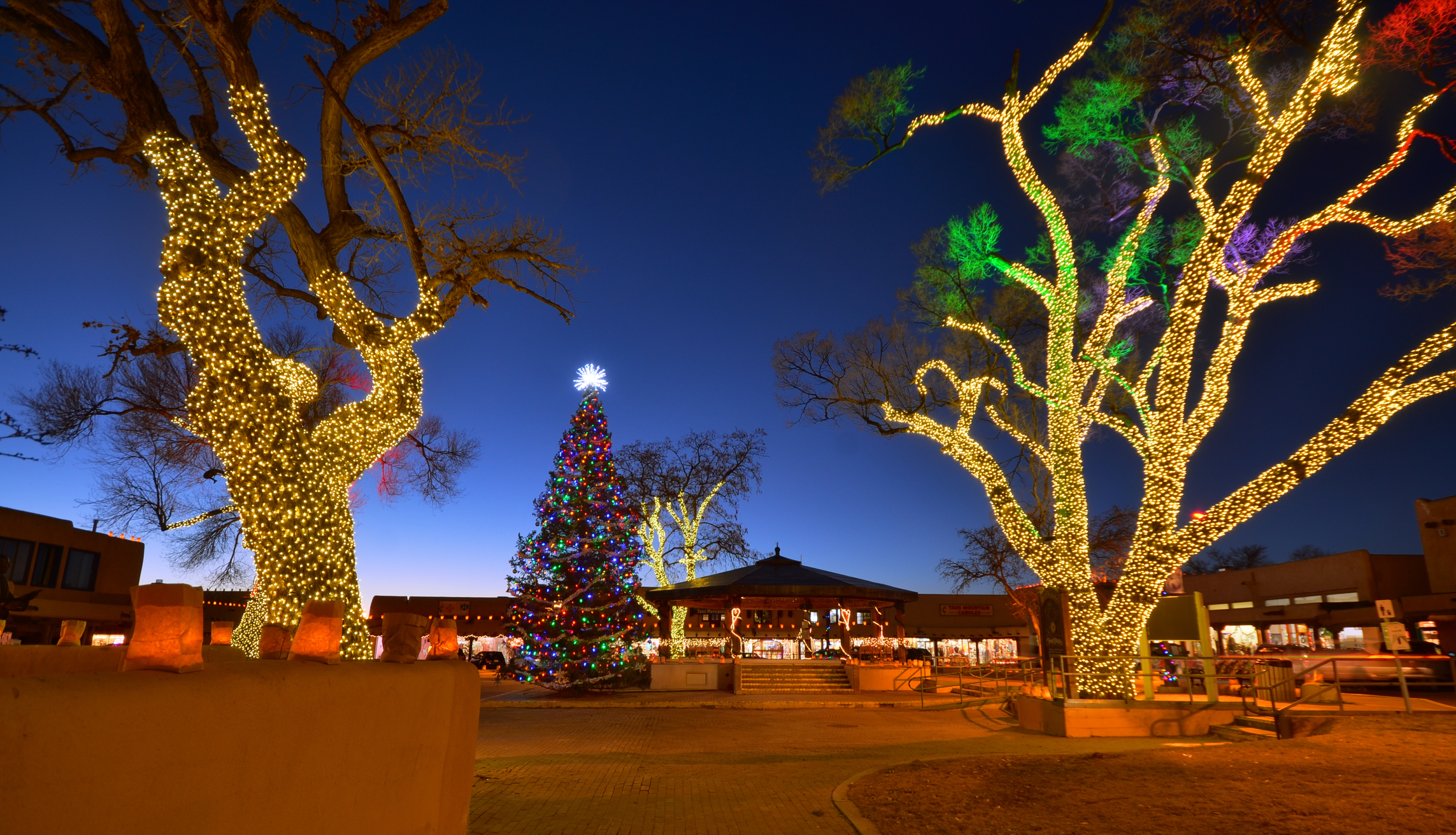Elegant trees wrapped with lights.