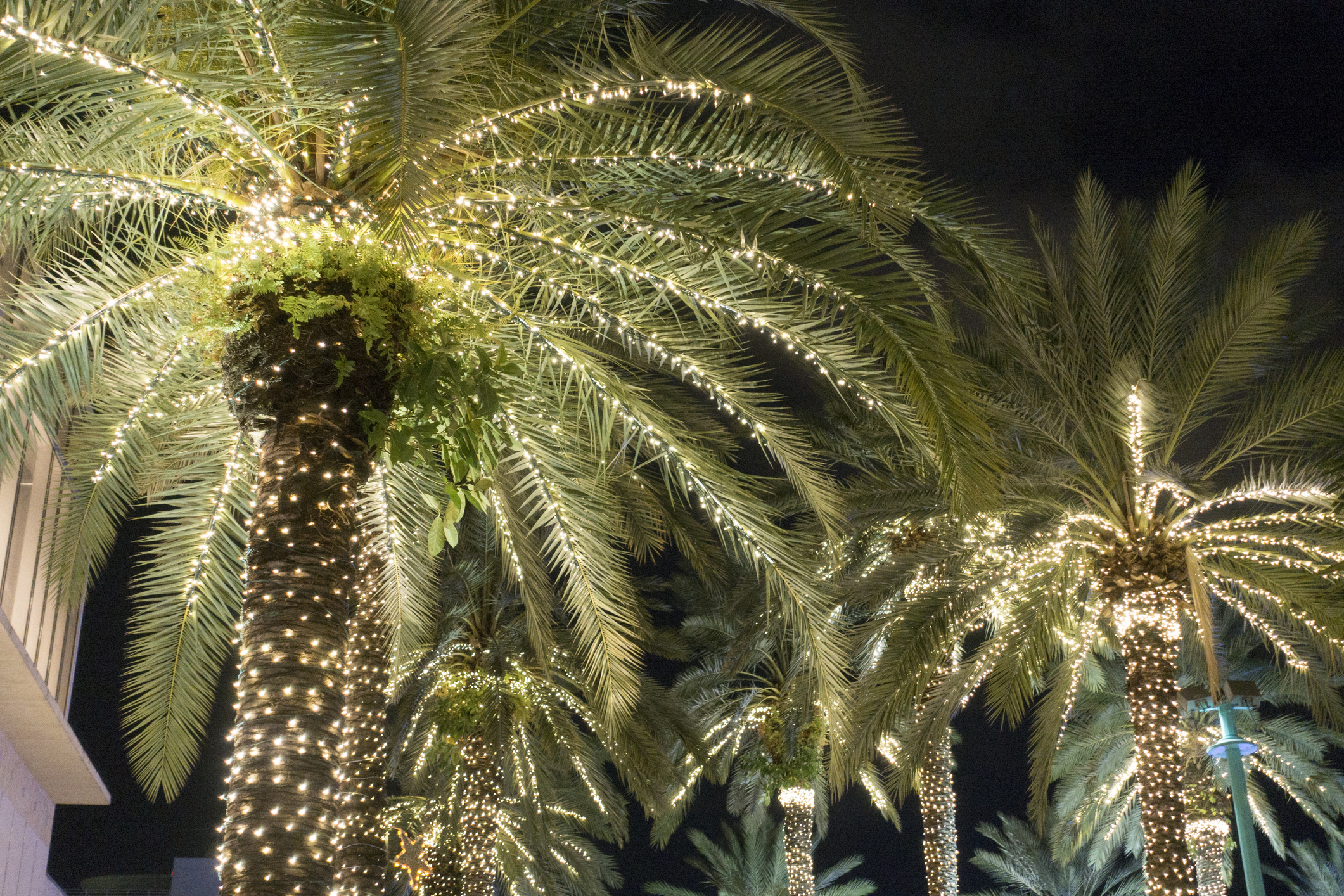 Holiday Palm trees with bright lights.