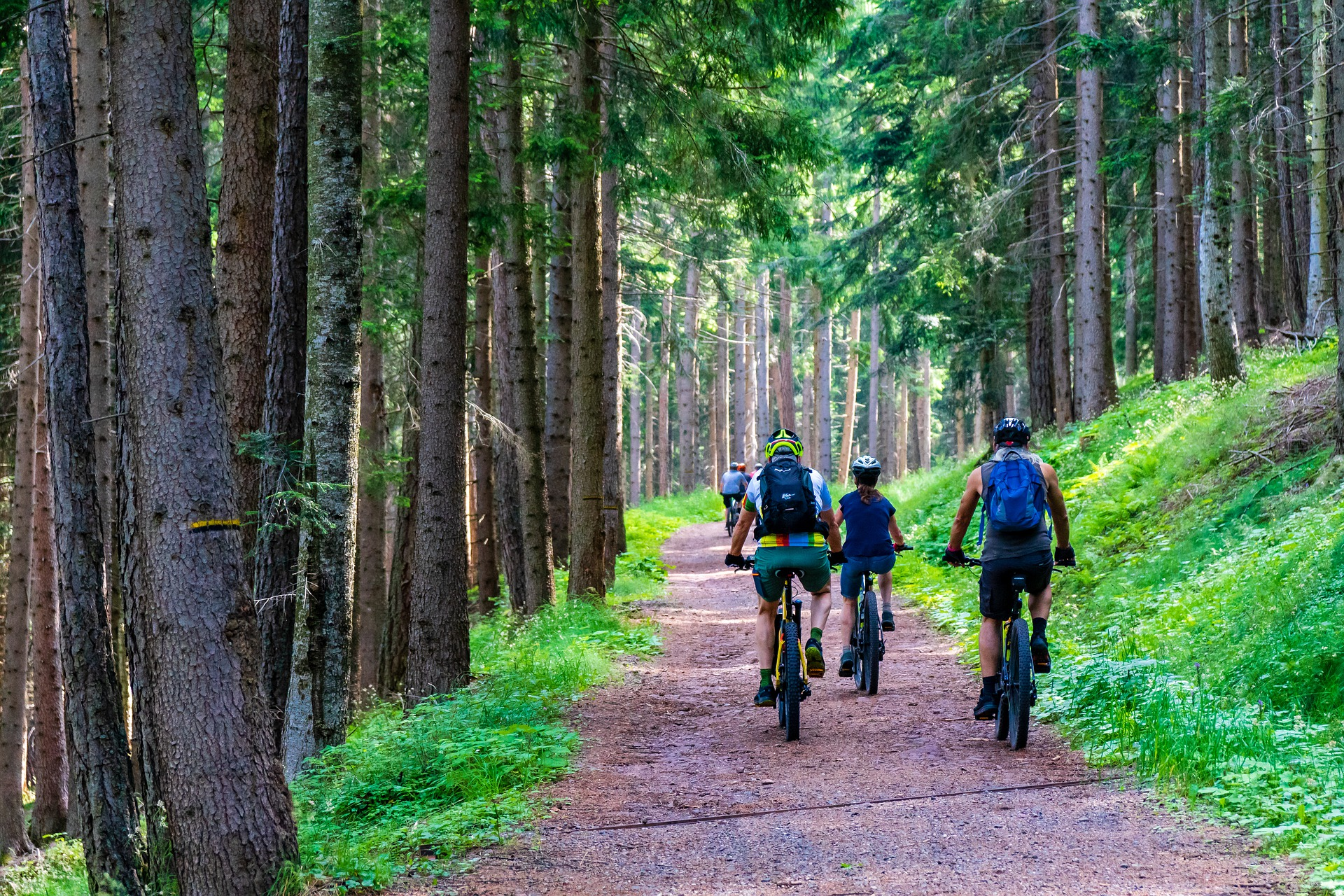 A group of bikers coasting down a heavily forested path.