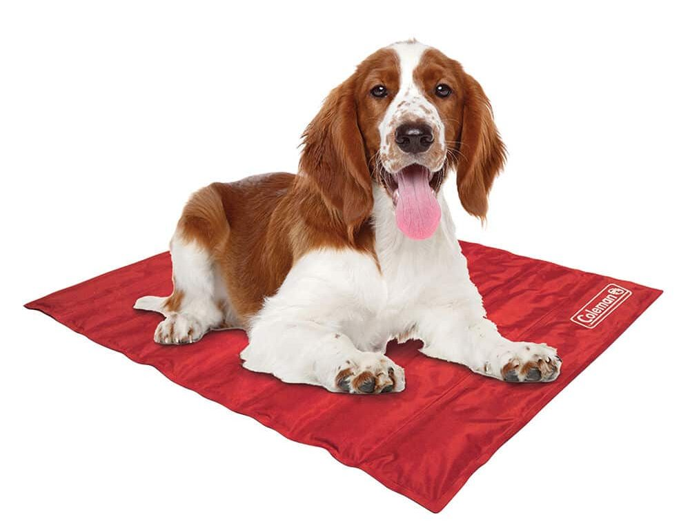Dog relaxing on a red mat