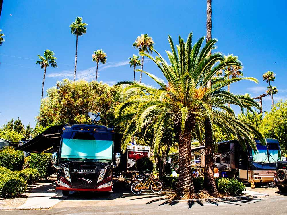 RVs camping under palm trees.