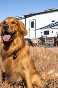 Golden retriever in field outside of RV>