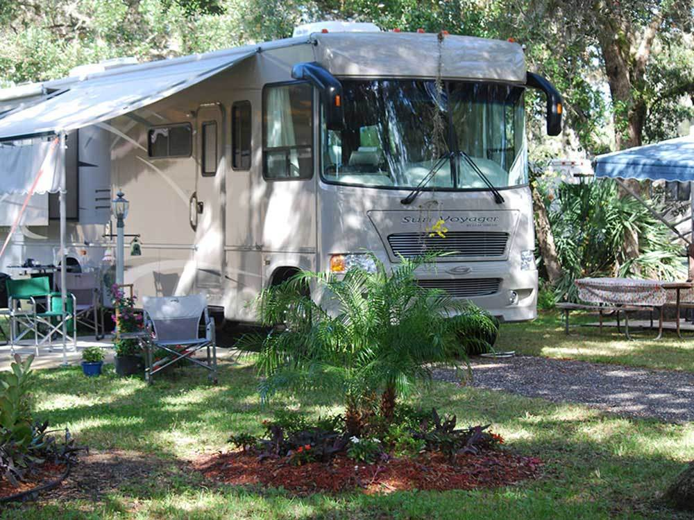 Motorhome parked under cypress trees
