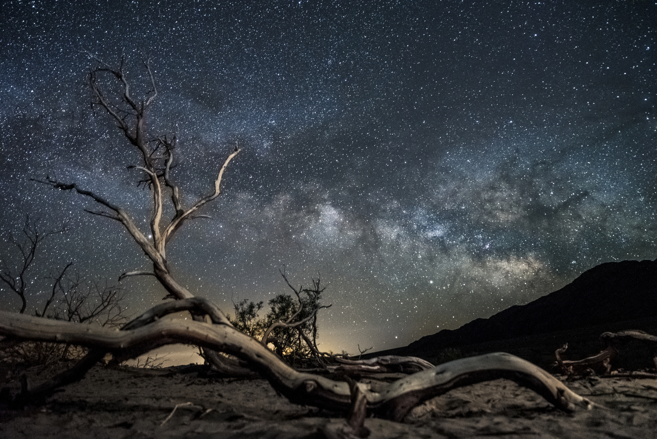 A dried out tree branch under a starry desert sky.