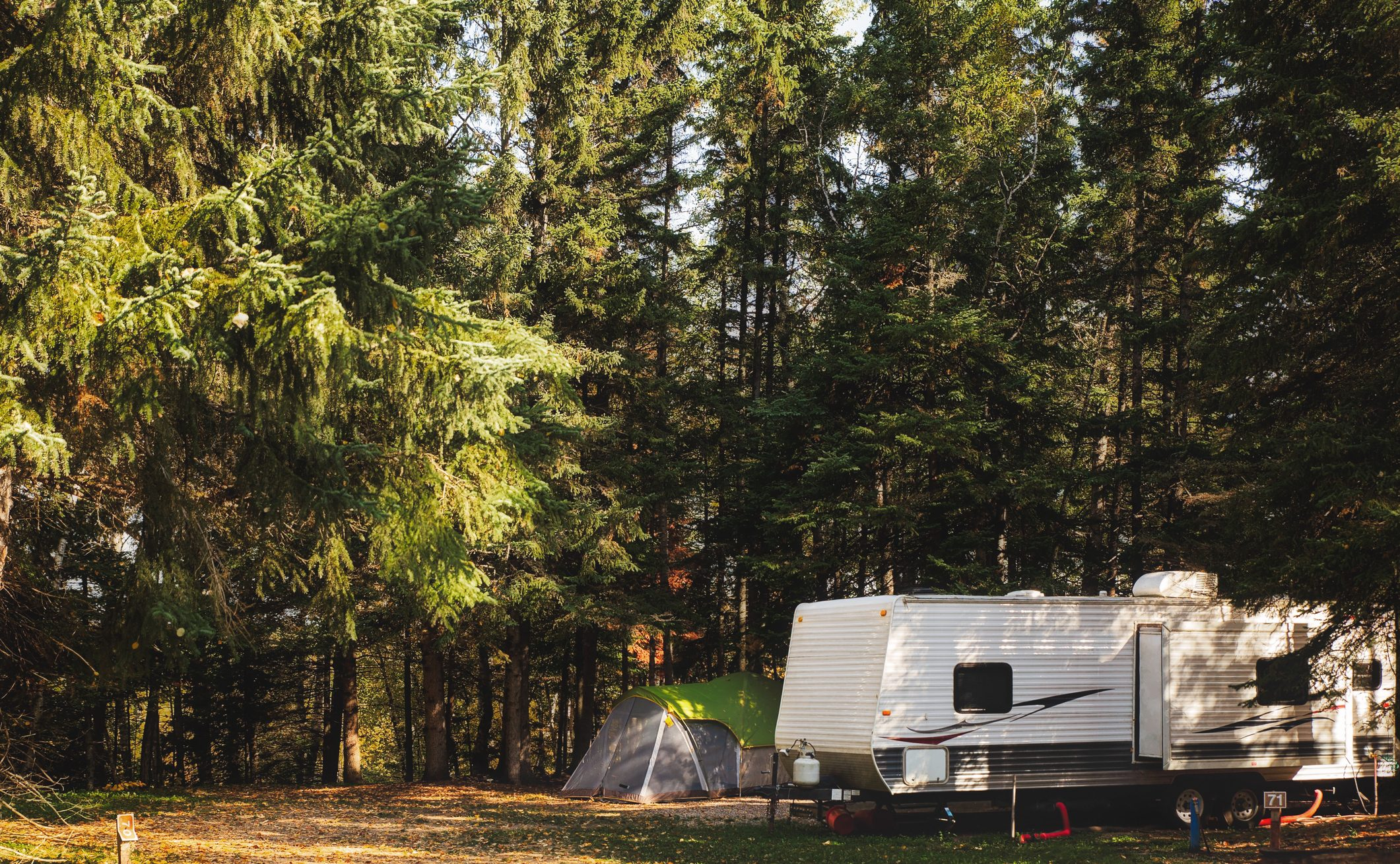 Travel Trailer parked under towering evergreen trees.