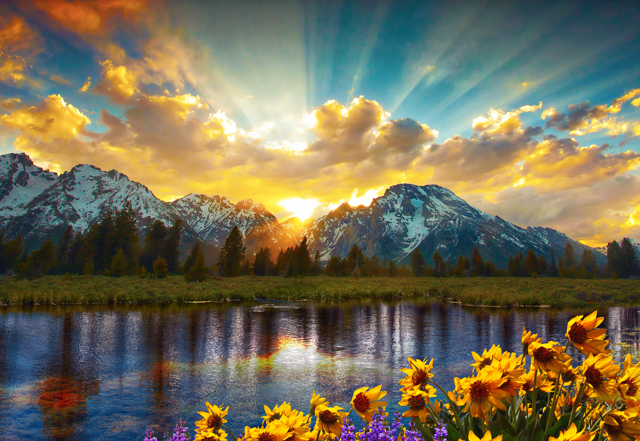 Sun rises over jagged mountains with flowers in foreground.