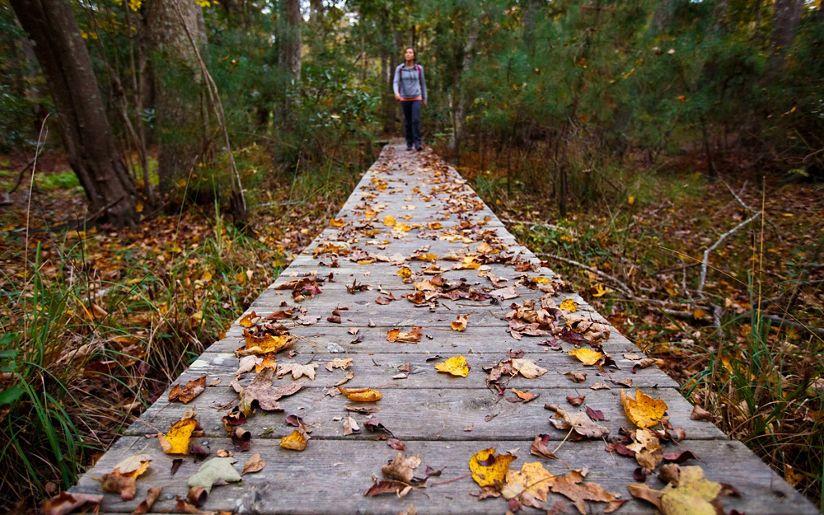 A lone hiker traverses a leaf-strewn boardwalk.