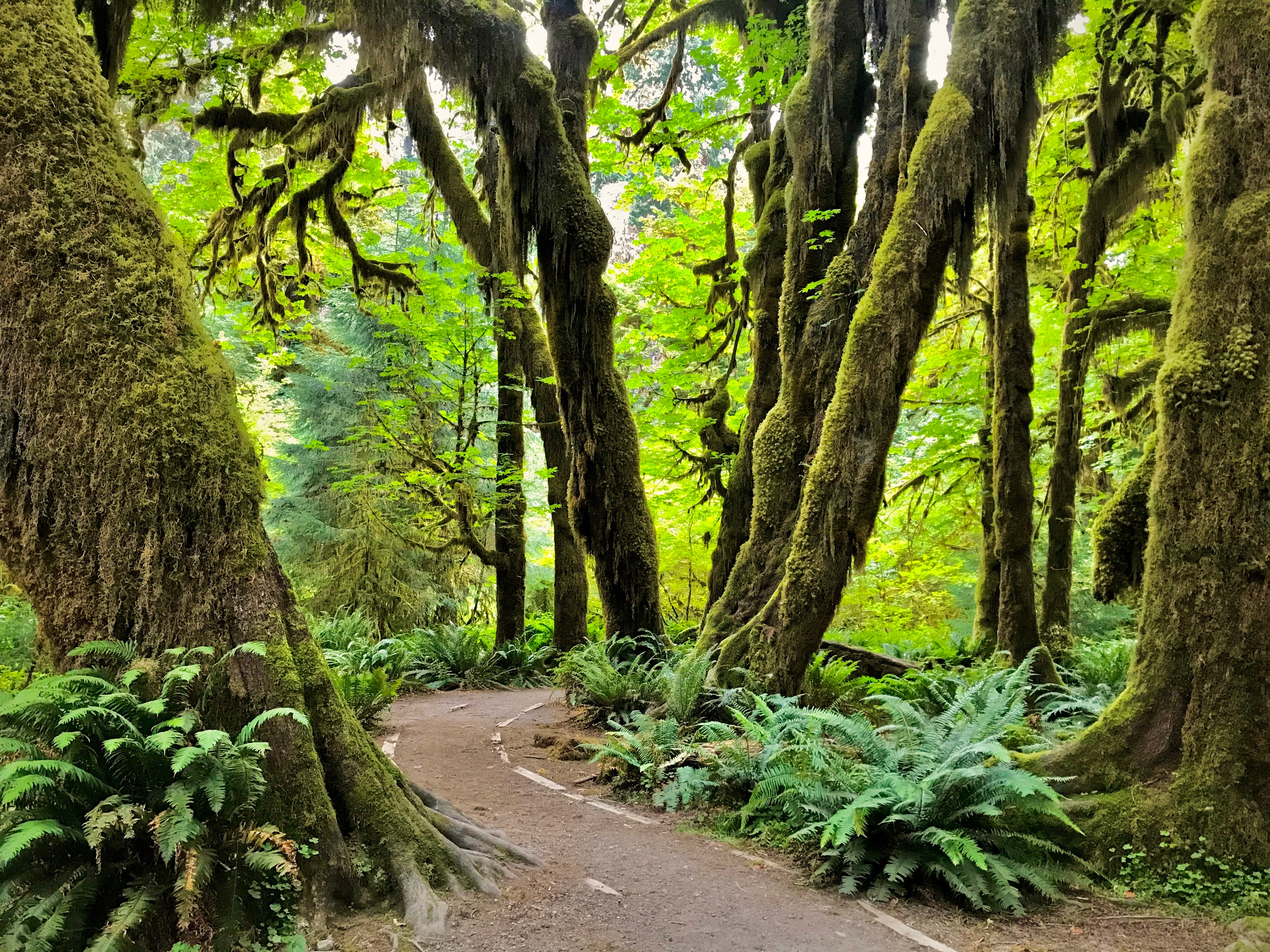 A trail leading through a mossy forest.