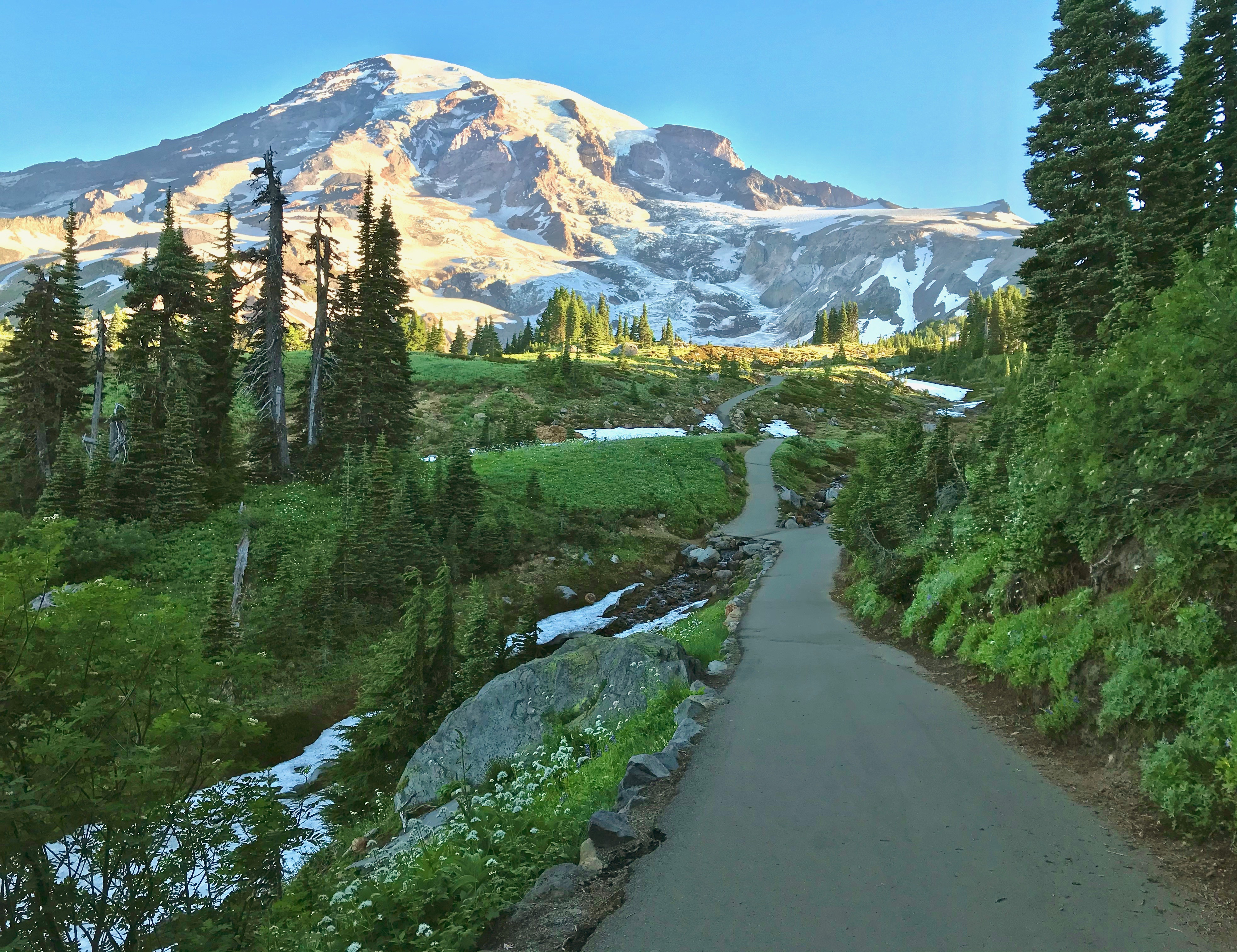 Mountain trail fringed by lush greenery with Rainier in distance.