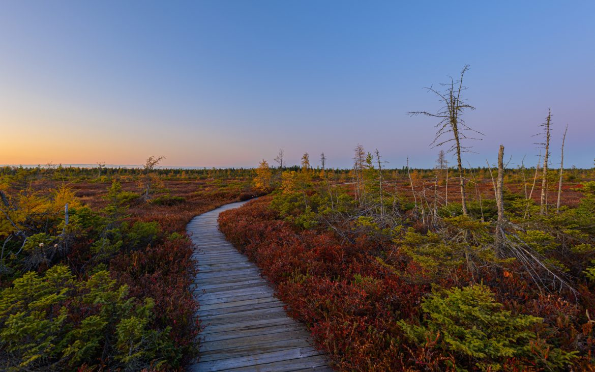 A boardwalk winds through the peat bog at Kouchibouguac National Park in New Brunswick, Canada at sunset
