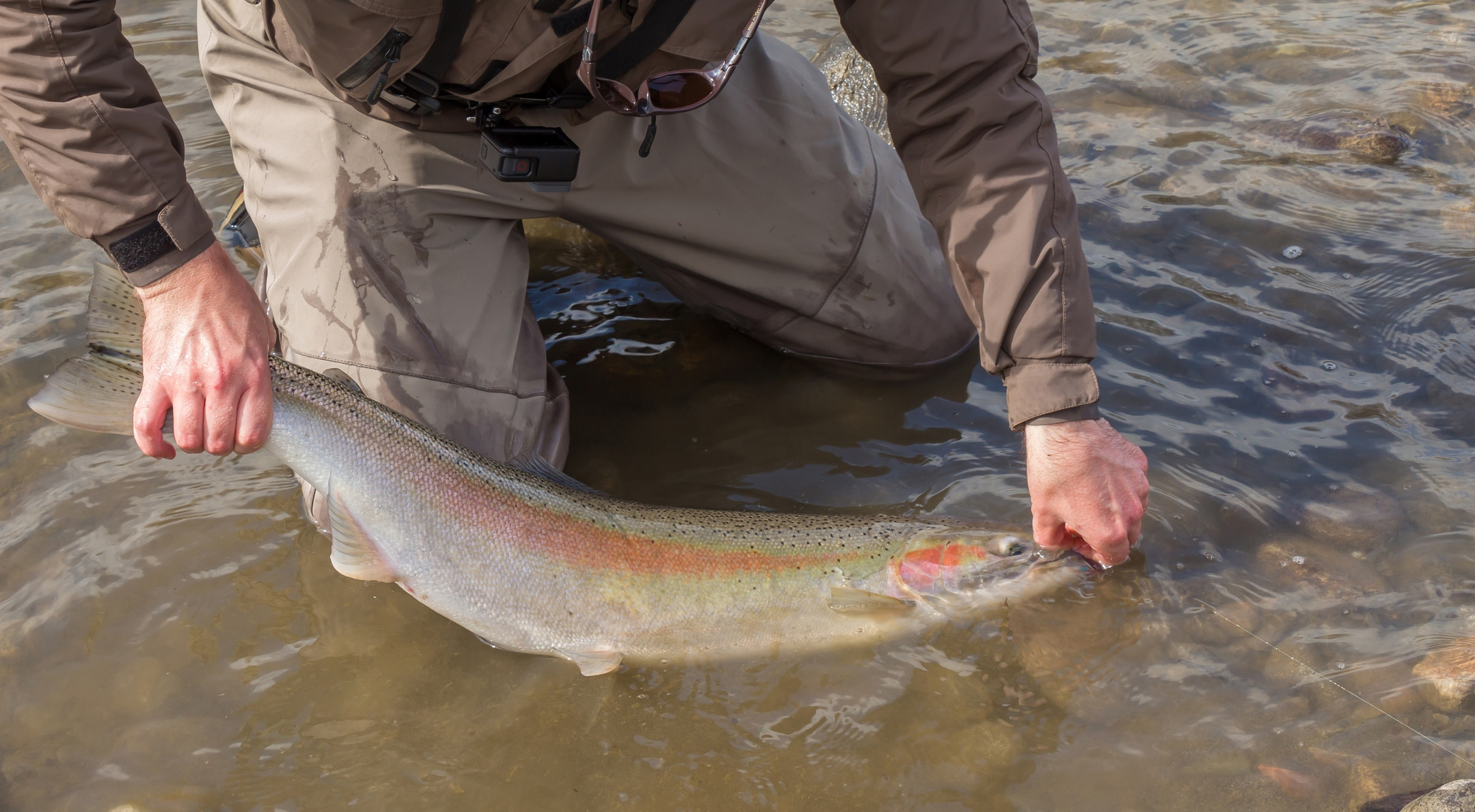 Man returns colorful fish to muddy waters.