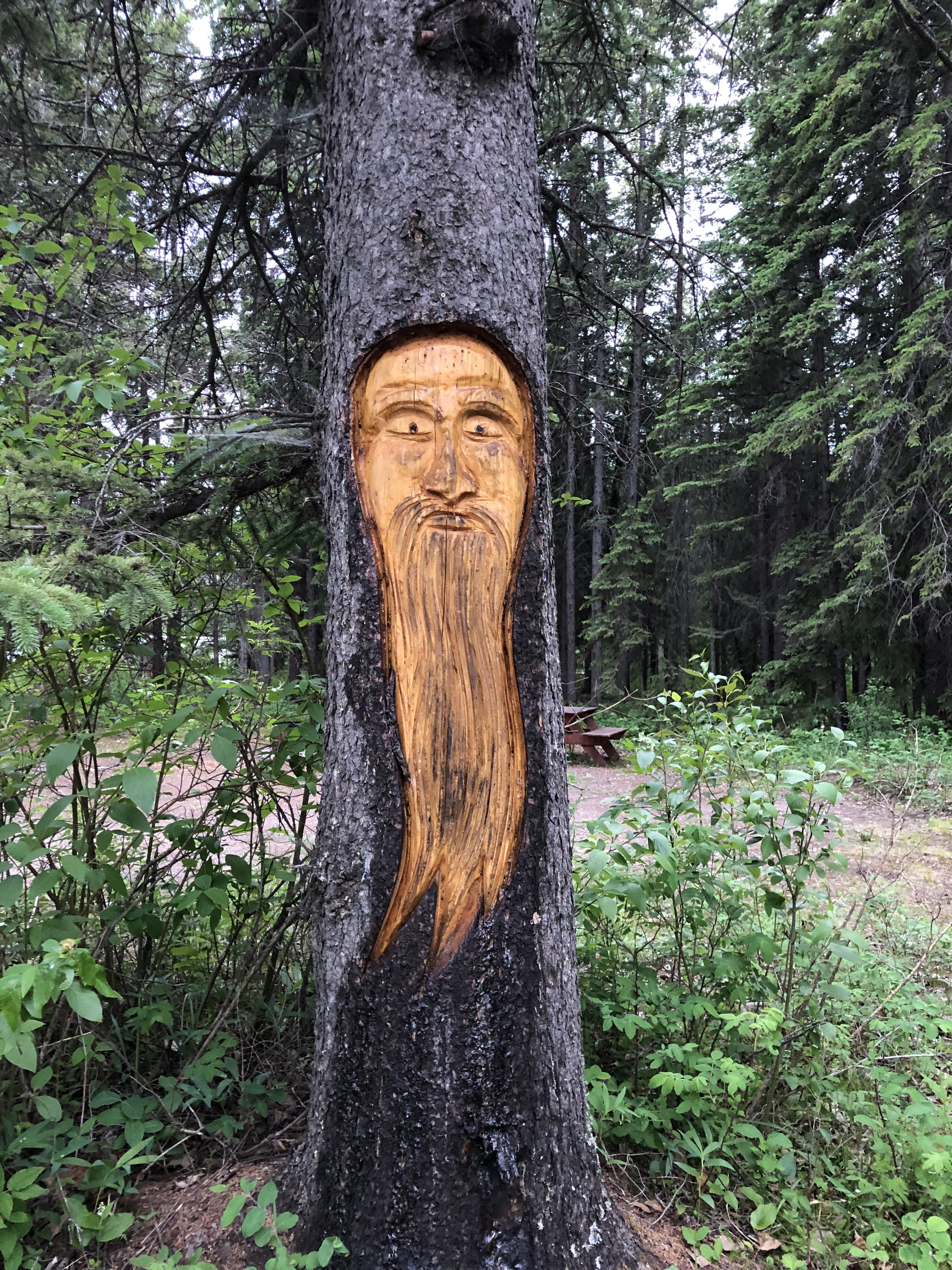 Face of old man with beard carved into side of tree