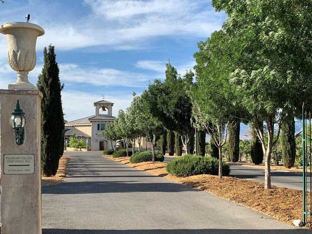 A tree-lined road to a winery.