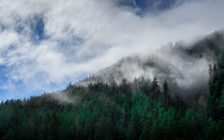 Haze over woods at Haida Gwaii, Canada