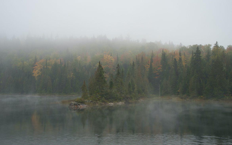 Fog amidst pine trees in La Mauricie National Park, Saint-Mathieu-du-Parc, Quebec
