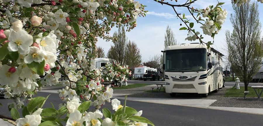 Touring the Columbia Basin — Flowers bloom in foreground of picture showing RV at campsite.