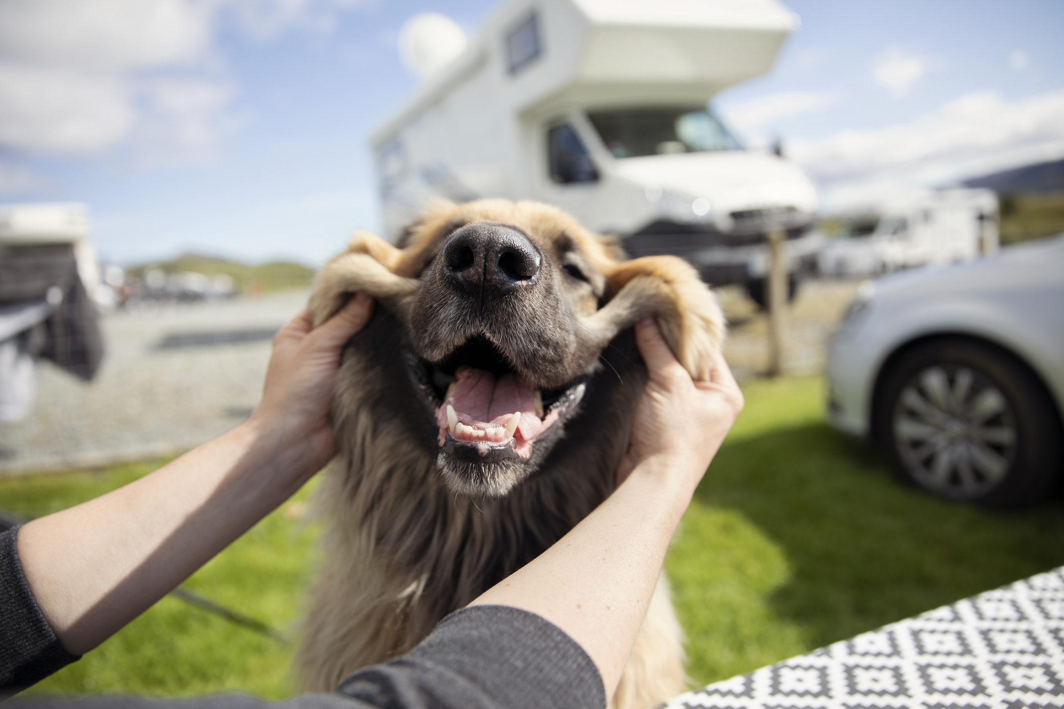 A dog lover grabs the cheeks of a big pooch at an RV camp.