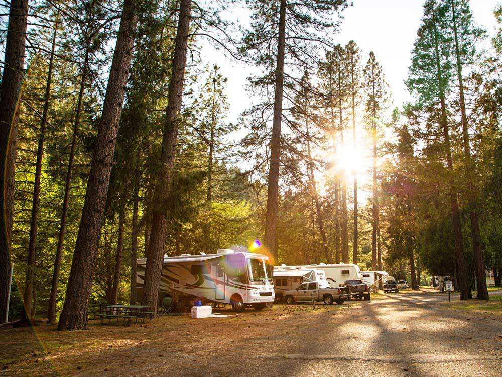 RVs parked under tall pine trees during sunset.