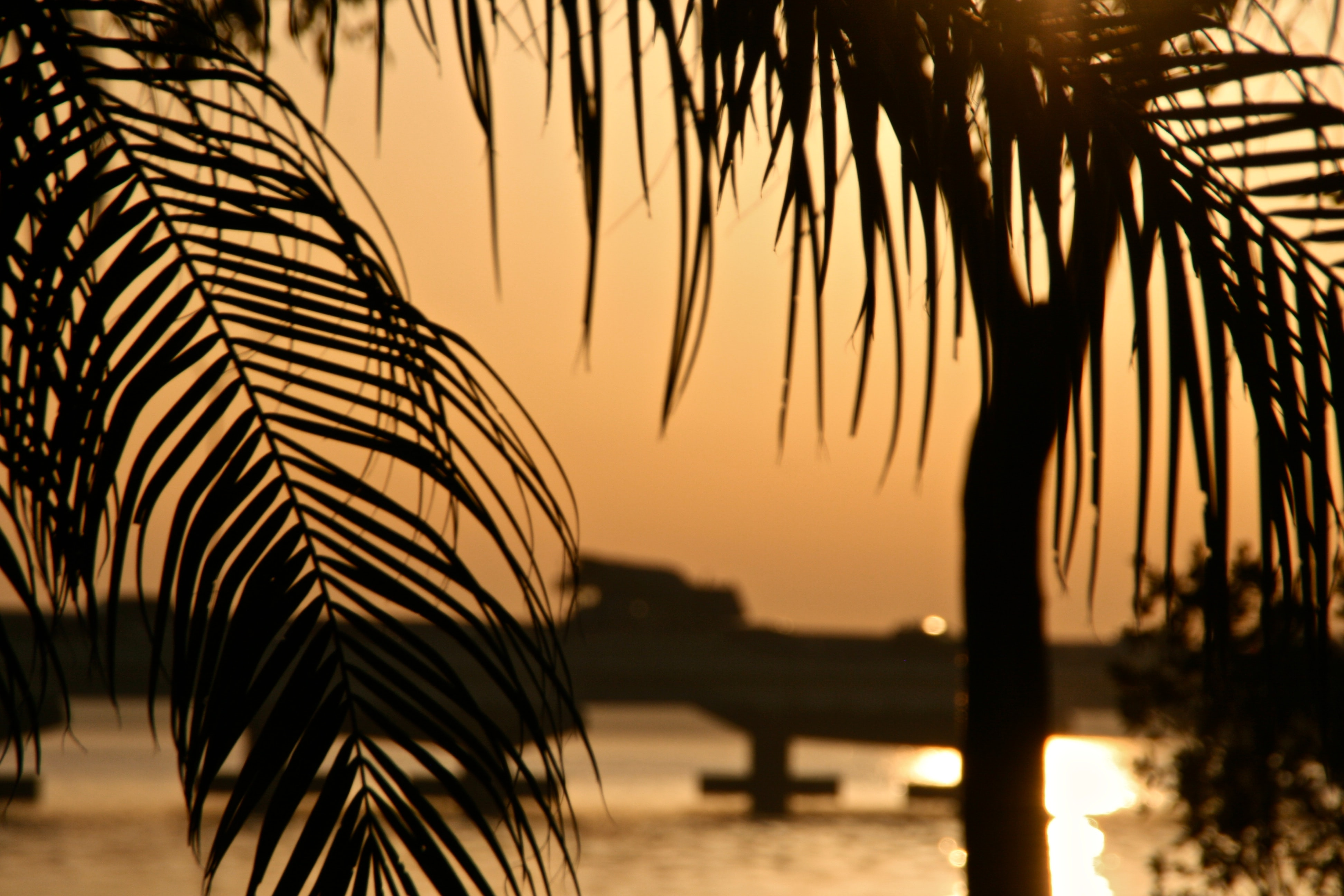 Palm fronds hanging over a sunset scene of a lagoon.