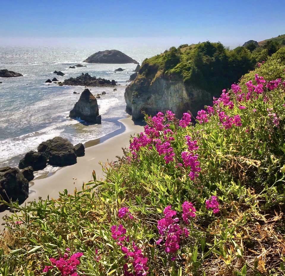 Purple flowers dot a ridge facing a rugged ocean.